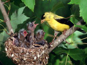 «Las zorras tienen madrigueras, y los pájaros del cielo nidos»